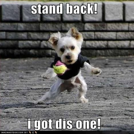 funny dog pictures with sayings - Bing Images