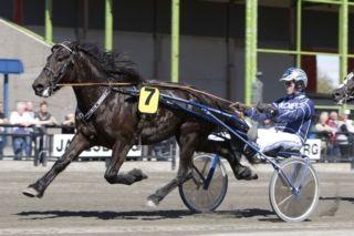 Tangen Piril <3 født 2012  <3    MERITTER: 2.plass Svensk Travkriterium 2015.     1.plass Alm Rau Jo´s Æresløp 2015.     Bestetid: 25,7 a