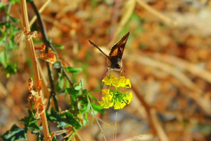 #butterfly #kelebek
