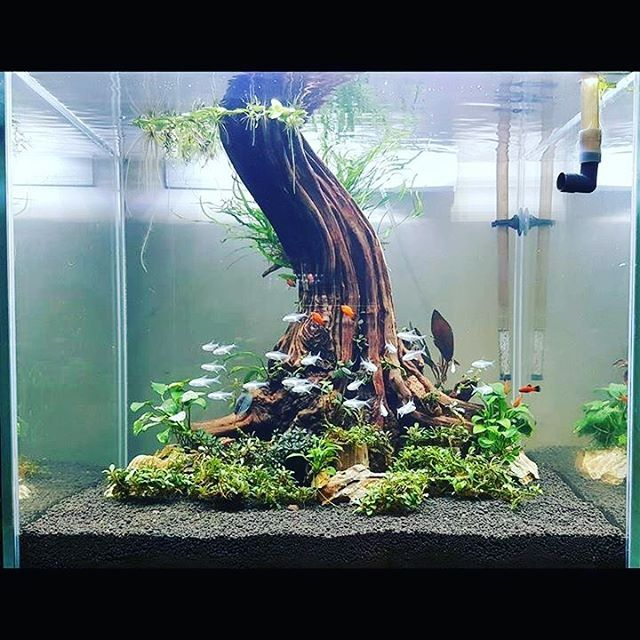 13394 best aquascape images on pinterest fish tanks for Above water fish tank