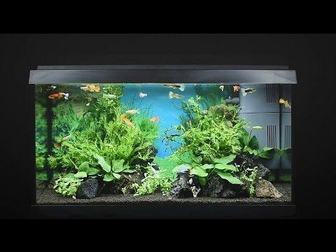 Juwel Aquarium Primo 60 - 60l Einrichtungsbeispiel / Tutorial - YouTube