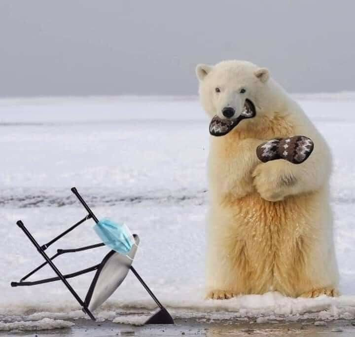 Pin By Suzanne Koopman On Aaa Too Funny 3 In 2021 Animals Polar Bear Funny Animals