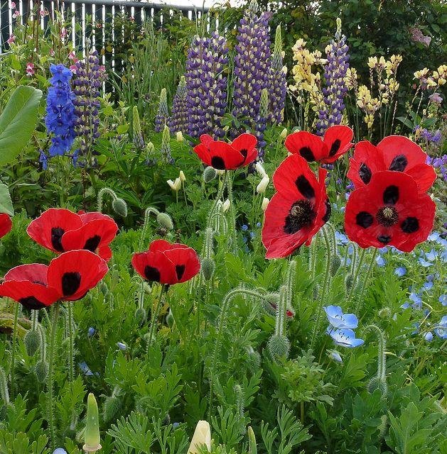 17 best images about garden on pinterest gardens for Koi garden bolzano
