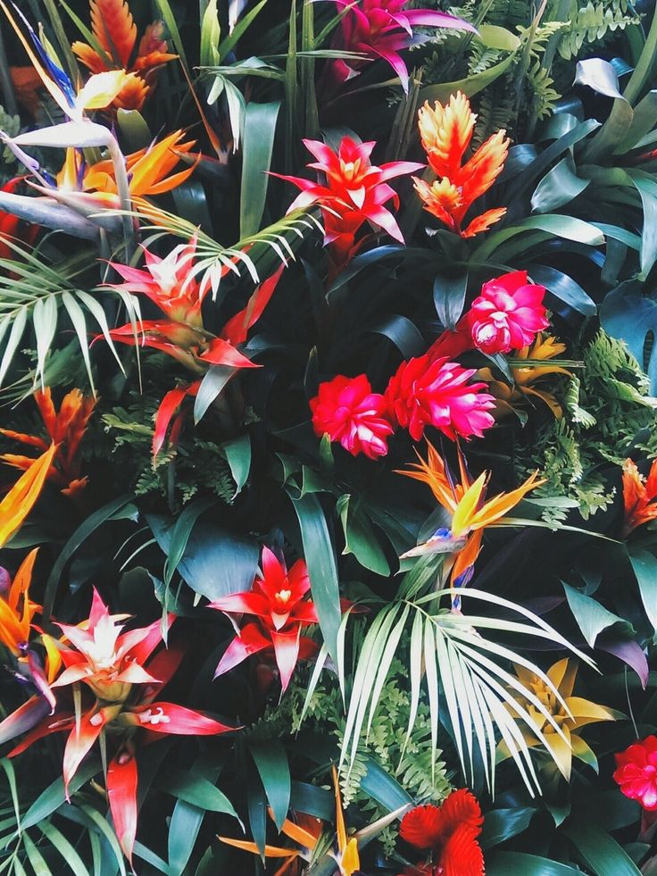 Tropical Rainforest Tumblr