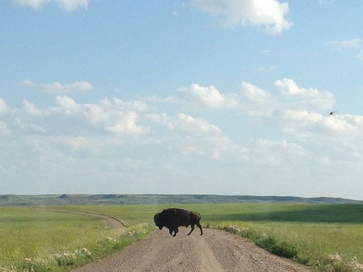 Grasslands National Park - Suggested by: Catherin Gregory, CDHA Inc #park #outdoors