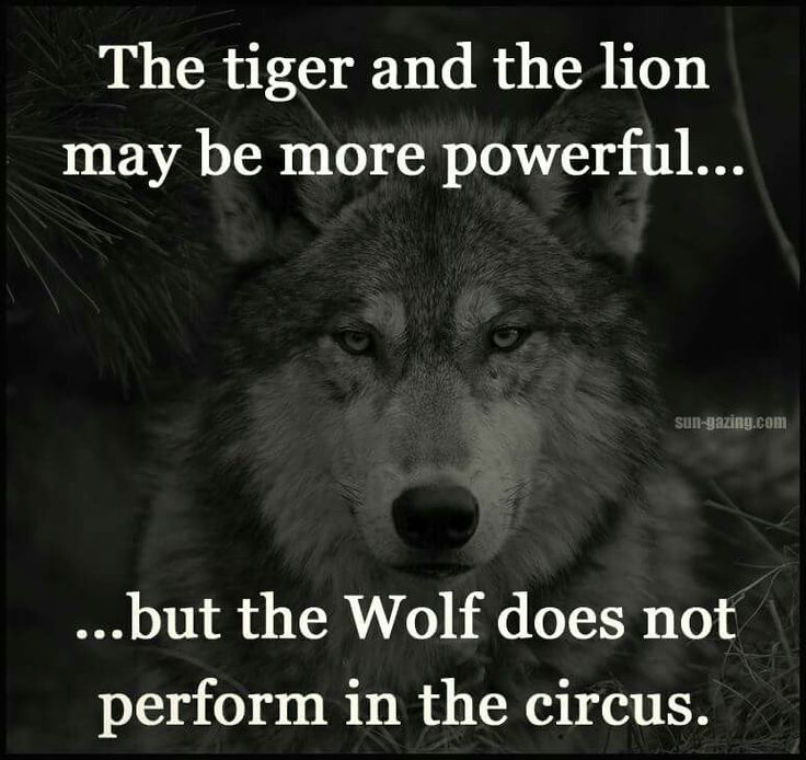 Throw me to the wolves and I'll come back leading the pack... don't mess with someone like me you'll always lose!