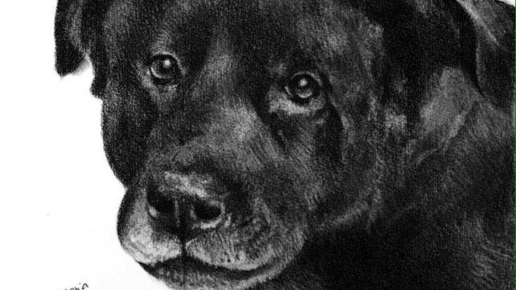 El pasado 6 de enero fue asesinado de forma brutal y cobarde Cholito, un perrito que vivia en una galería del Barrio Patronato. Este cruel suceso se dió al parecer a mano de dos personas.Los sujetos sin mayor arrepentimiento  golpearon y vejaron al animal sin medir la violencia aplicada sobre el ser...