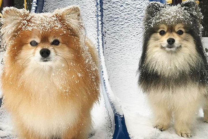 If you didn't know, much of the northeast is currently getting pummeled by snow. For commuters, homeowners and anyone who works outside, snowstorms are basically the worst. There's nothing good about them. Nothing. Oh, except for one thing: Pictures and videos of animals in the snow.  SEE ALSO