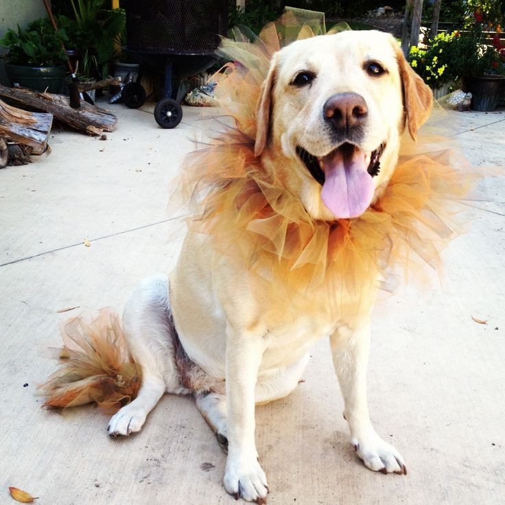 How to Make a Tutu. He's a lion! Aaaah! So cute!