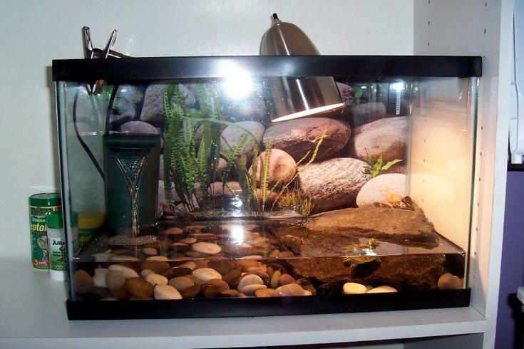 Turtle tank :D Pets Pinterest