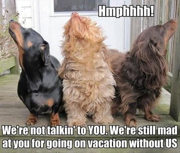 Haha That's exactly what Boomer does when I go away, after he covers me in kisses cuz he missed me.