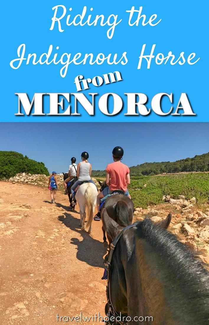 When visiting the island of Menorca, on the Spanish Mediterranean, people tend to flock on to the beaches. But one of the most interesting activities available is riding the Menorquín horse, indigenous to the island and of a very calm and obedient nature.
