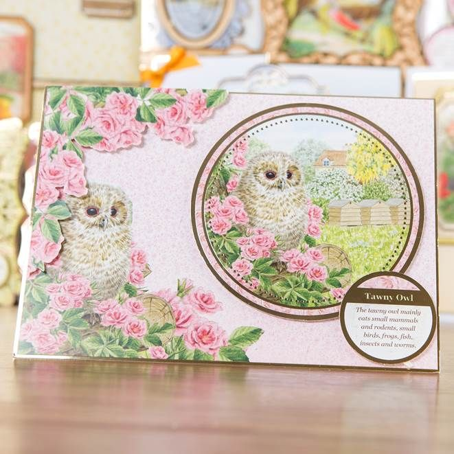 What a hoot! Buy #Birds of Britain Collection at Create & #Craft: http://www.createandcraft.tv/Hunkydory_Birds_of_Britain_Luxury_Card_Collection-339370.aspx?fh_location=//CreateAndCraft/en_GB/$s=Hunkydory%20Birds%20of%20Britain%20Luxury%20Card%20Collection%20339370 #papercraft #cardmaking
