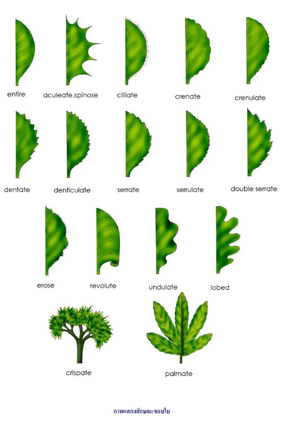 photosynethesis Photosynthesis • energy from sunlight is used to build glucose out of carbon dioxide and water • oxygen is released as an output • occurs in chloroplasts using the green pigment chlorophyll inputs •carbon dioxide •water •light outputs •glucose •oxygen.