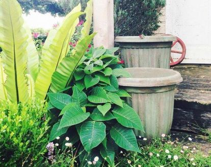 how to upcycle  cheap flower pots, container gardening, crafts, gardening, Photo via The Palette