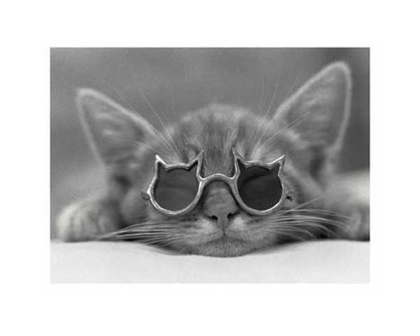 grappige posters  poes met zonnebril