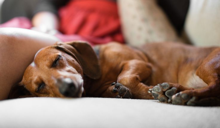 If you are a dachshund devotee, and just can't get enough of the mini hound, here are nine things you need right now.
