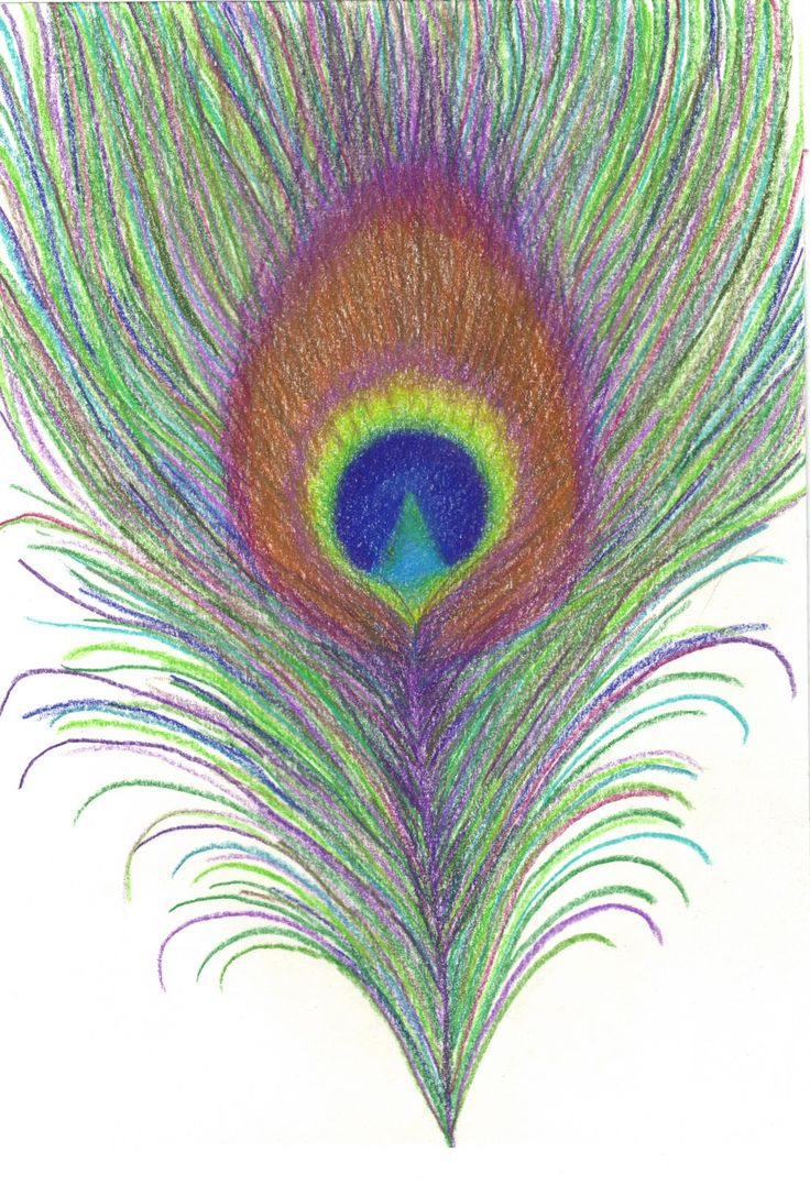 drawing peacocks feathers drawing peacock drawing pencil painting ...