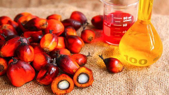 Il frutti della Palma da Olio e l'olio di palma