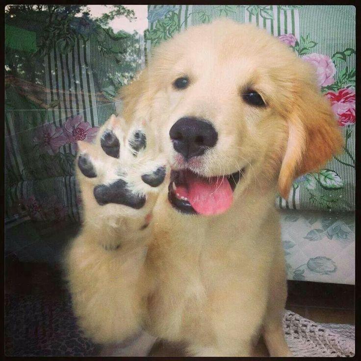 Hallo! Hab weder einen Doktor, noch einen Magister, dafuer ein treues Herz und umwerfendes Laecheln...ich folge, wenn du mich verstehst, brauche weder Hundeleine noch Beisskorb, weil du mein bist!  So! Hab ich jetzt den Job?