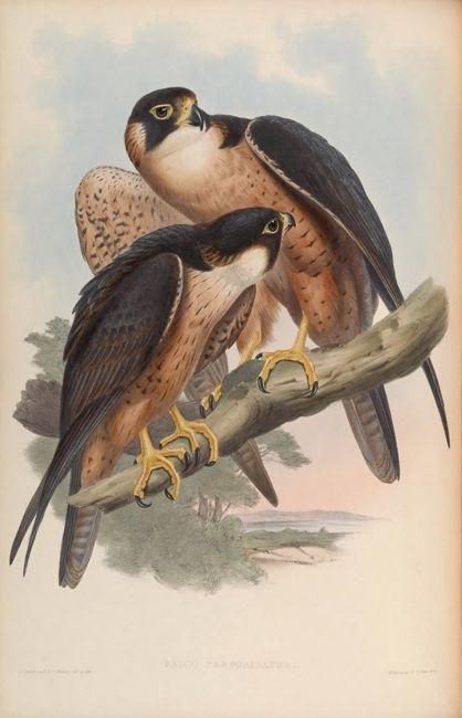 Пастырское животных буксировки коричневые птицы дерево пейзаж картина маслом холст печатные издания напечатаны на холст стены искусства украшения картины