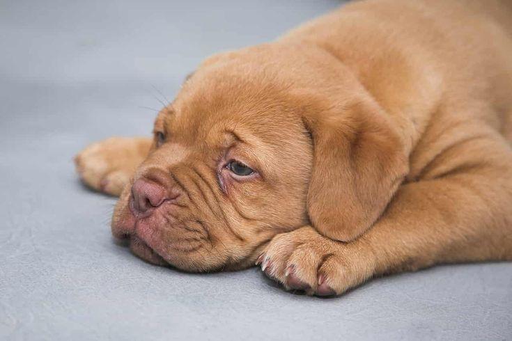Den Welpen Abholen Checkliste Off Leash De Niedliche Hunde Kinderfreundliche Hunde Welpen