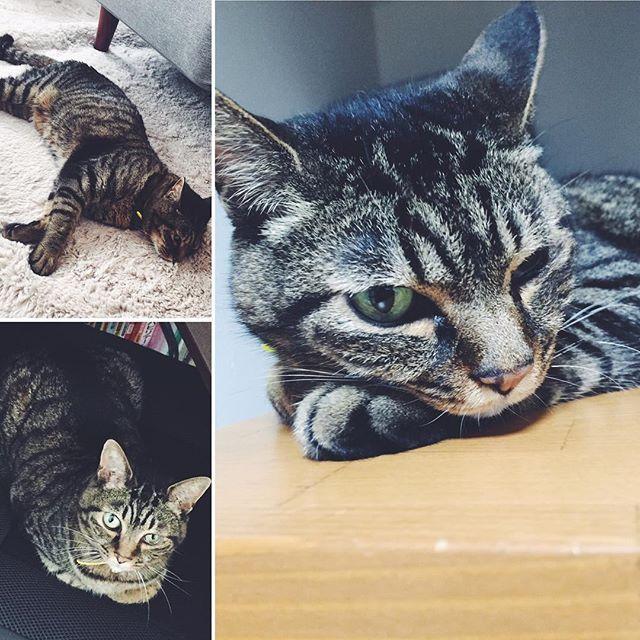 * 2016.11.3 ジャンティ10th🎉 . 拾った時は一ヶ月生きたら 奇跡だよって言われてたけど 病気に負けないで10年も 長生きしてくれてとっても嬉しい💓 . まだまだこれからもよろしくね👌🏻✨ * * #愛猫 #誕生日 #捨て猫 #病気に #負けない #長生き #猫大好き #ねこ #猫 #この時期は #猫バンバンプロジェクト