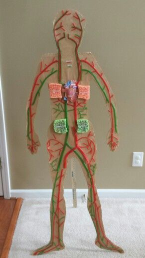 Craft Ideas For Circulatory System