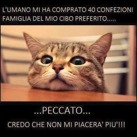 ★ #Peccato ★ Tov Official Youtube: www.youtube.com/user/TovEDispies/  #Tov #LOL #Gatto #Condividi #Seguimi - Tov e Dispies - Google+