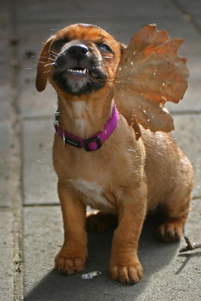 You can shtart Chrishmush shopping nao! Winston is the cutest leaf-peeper evar, Jess R.!