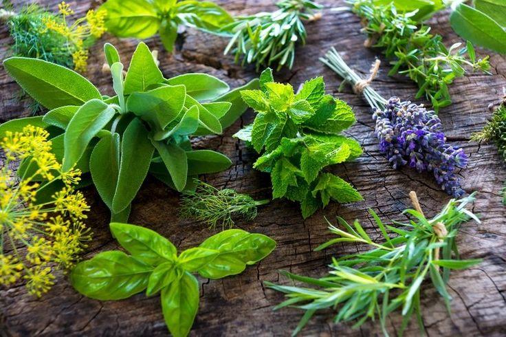 Как вырастить специи и пряные травы на подоконнике. 18 видео уроков
