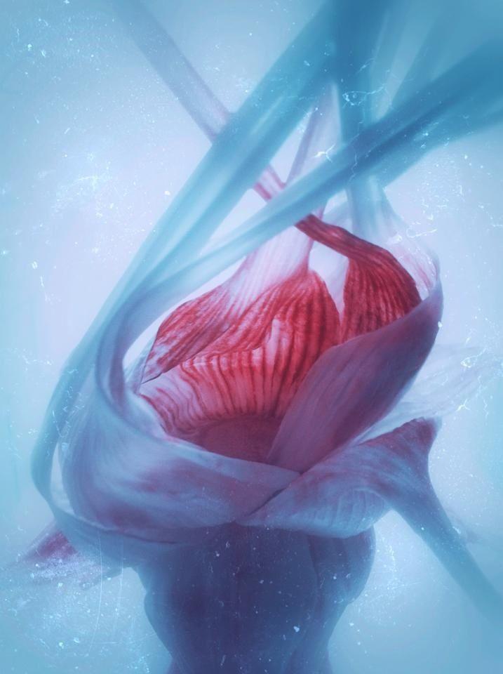 garlic, iPhone, art