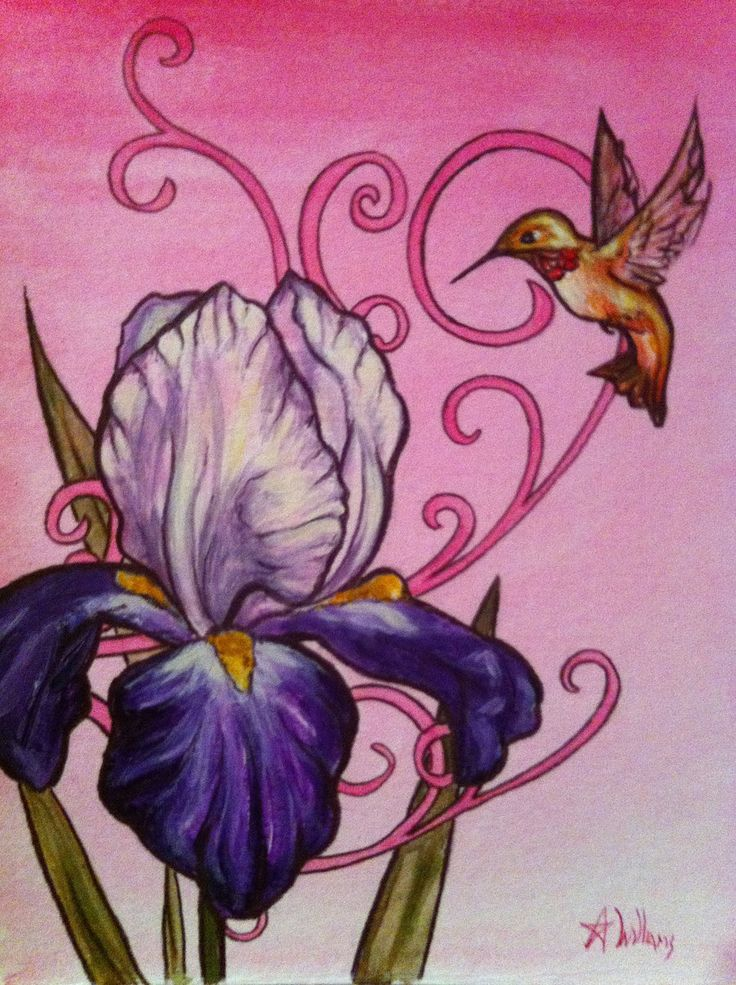 hummingbirds with iris flower pictures | Hummingbird with ...