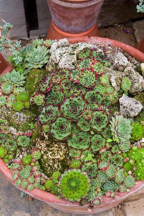 132 Best Succulent Gardens Images On Pinterest | Gardening, Plants And Succulents  Garden