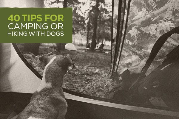 Best Rv Vacations With Dogs