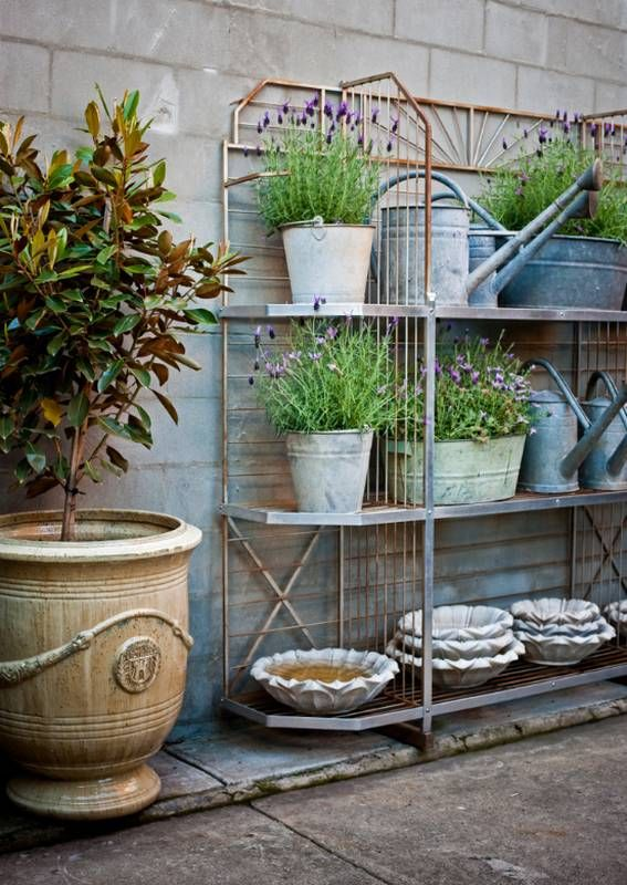 'vertical' garden lavender stacked in pots on shelves and magnolia trees love this shelving system and tin planters and watering cans