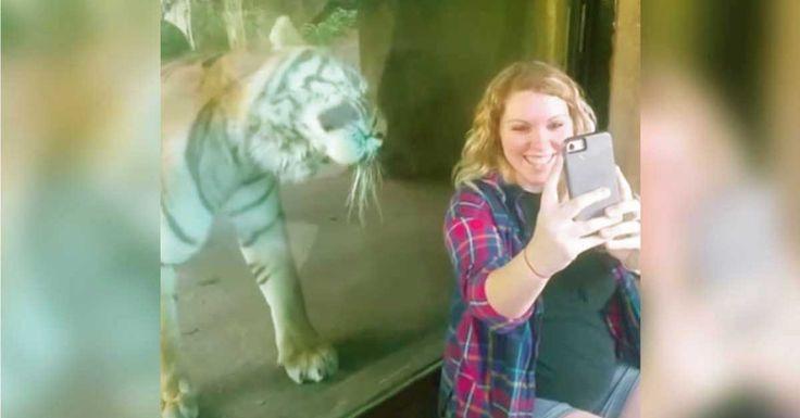 Mujer se fotografía con el tigre y este reacciona cuando descubre que está embarazada
