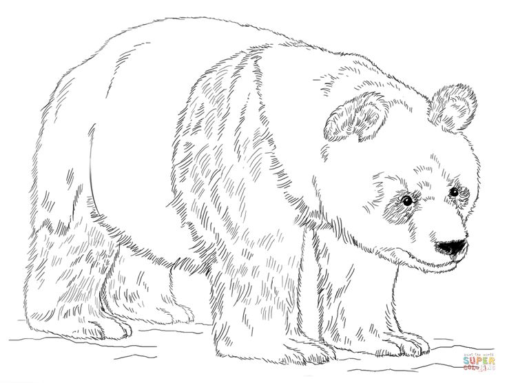 Giant panda bear Super Coloring Panda coloring pages