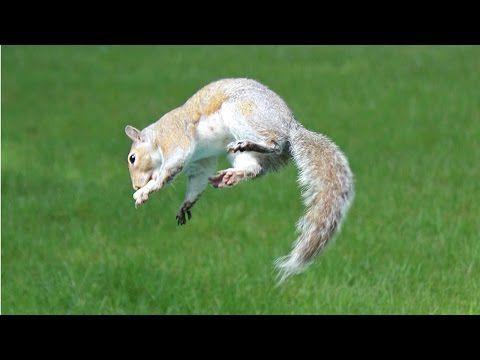 All Archives - Backyard Squirrels  .com