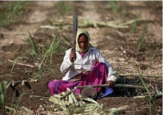 Ripples Commodity Blog: Sucden sees small global sugar surplus, record cro...