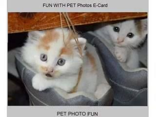 ,,,,kitty comedy clip stars talking kitty throwin' shade at mom,,, https://www.facebook.com/1039665662768555/videos/1161449667256820/ #cats #love #instagood #photooftheday #beautiful #cute #happy #fashion #followme #me #follow