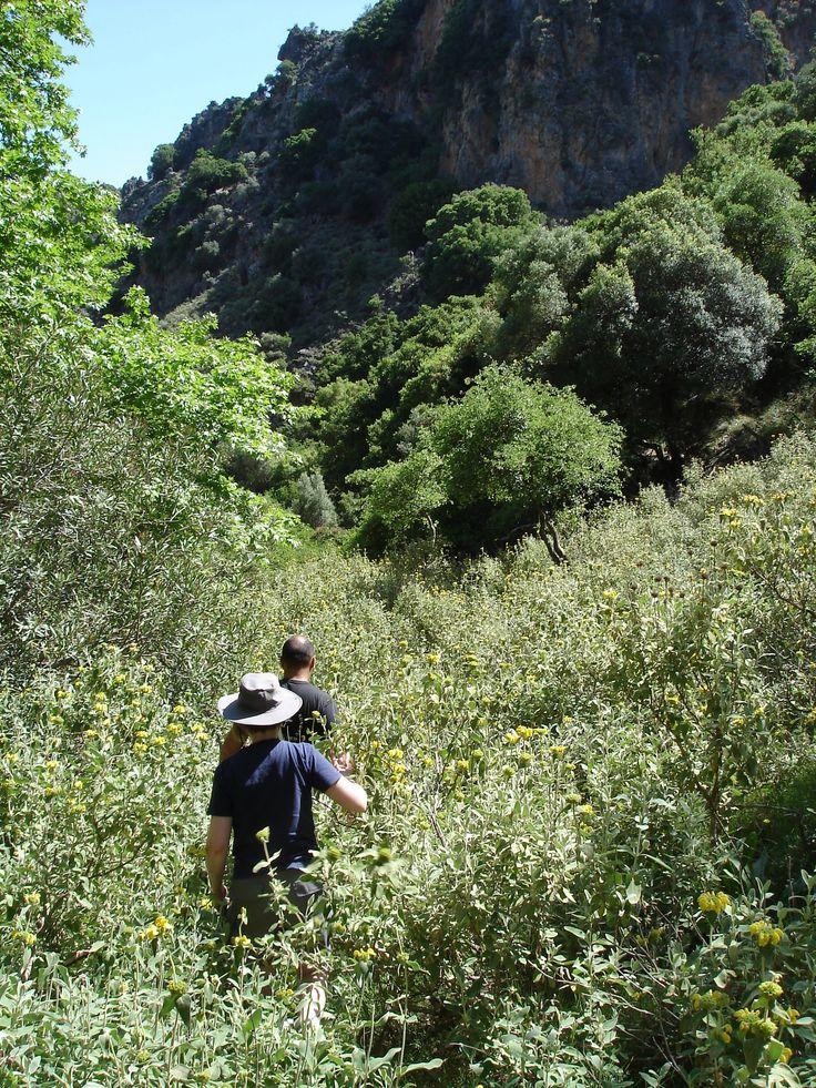 Wild flowers near Sirikari