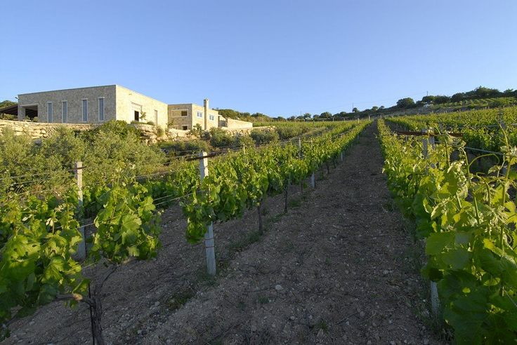 Today we visit #Tamiolakis #Wines @Choudetsi, 70100 #Herakleion, #Crete, Greece T: +30 2810 742083 F: +30 2810 742083 The winery' s page at our website: http://bit.ly/1rFGgPn