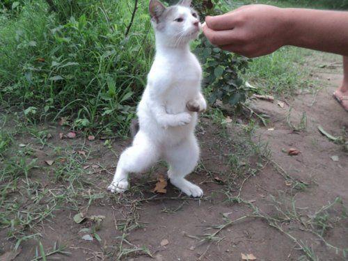 Cabbit or cribbit