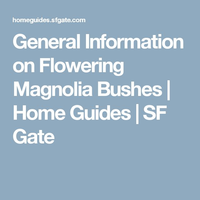 General Information on Flowering Magnolia Bushes | Home Guides | SF Gate