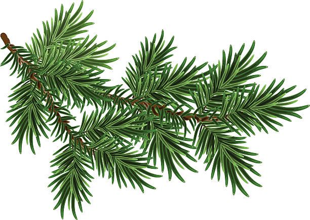 25+ Pine tree branch clipart ideas