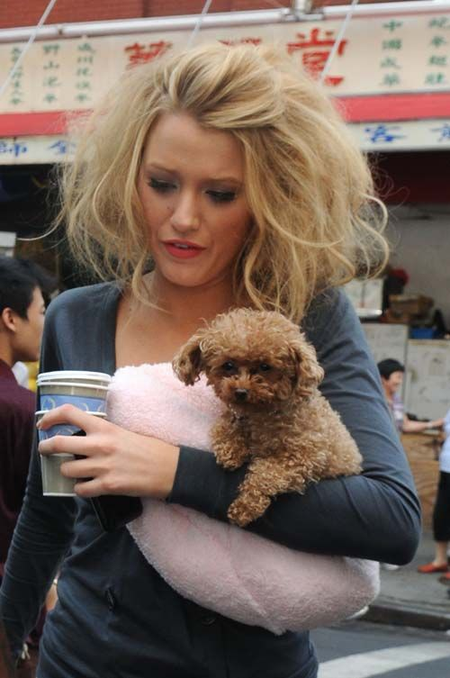 celeb pets    Celeb Dogs   Celebrity Pets of Alloy Entertainment   Alloy ...