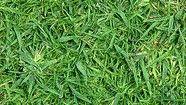 De Grasdokter: Onkruiden in het gazon