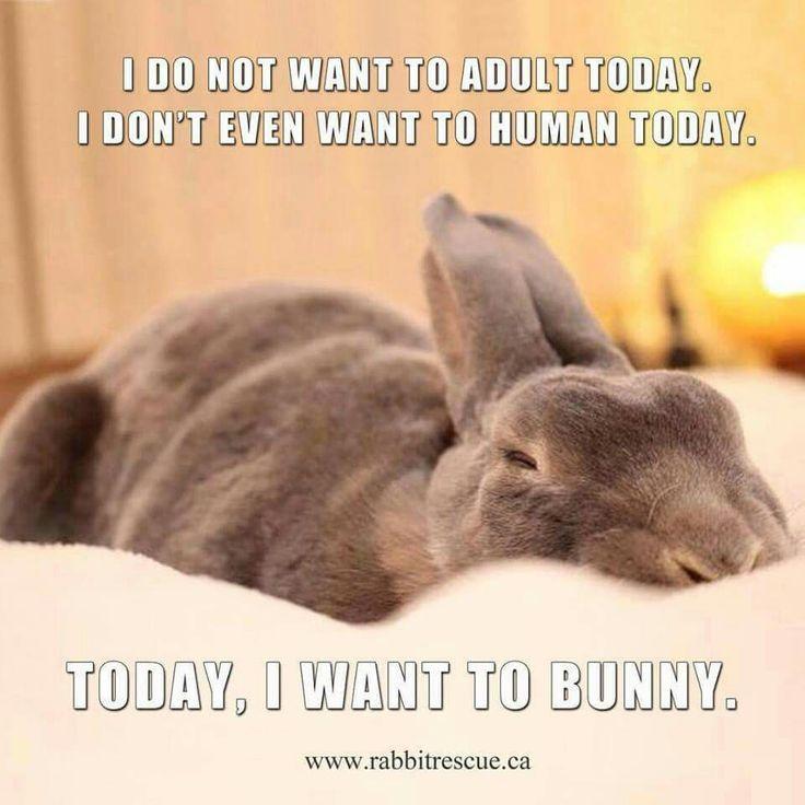 I want to bunnie!
