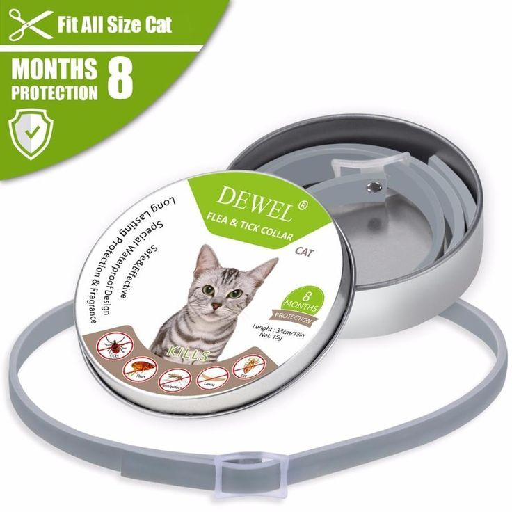 Anti Tick Flea Collar For Cats Cat Fleas Cat Flea Collar Fleas